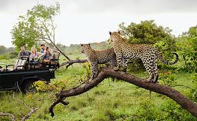 7 AMAZING PLACES TO EXPERIENCE A SAFARI